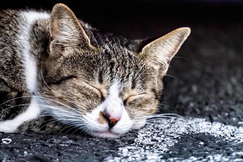 倒れる猫2