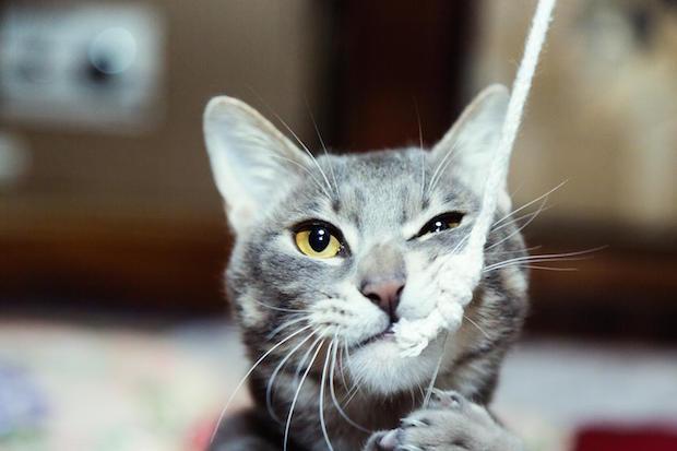 釣り針で釣られたネコ