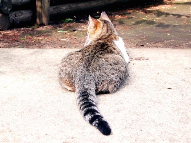 座り込む猫