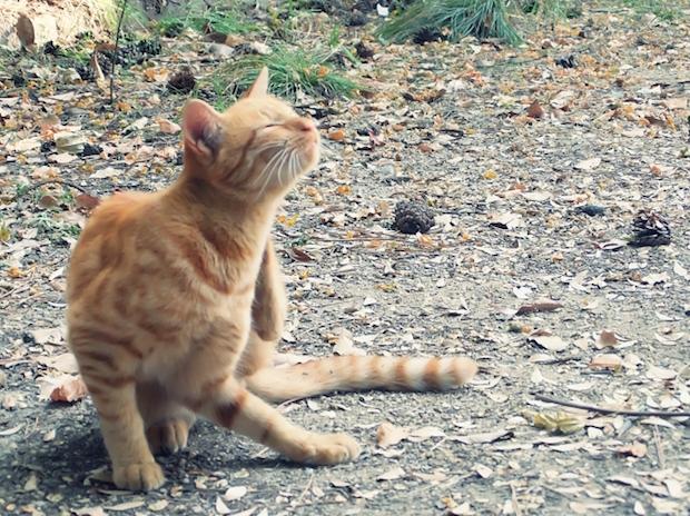 喉を掻いている野良猫