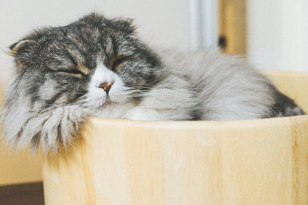 オケで眠る猫