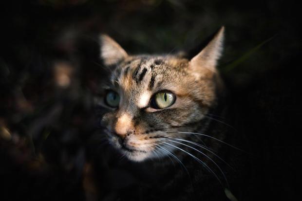 暗闇から覗く猫