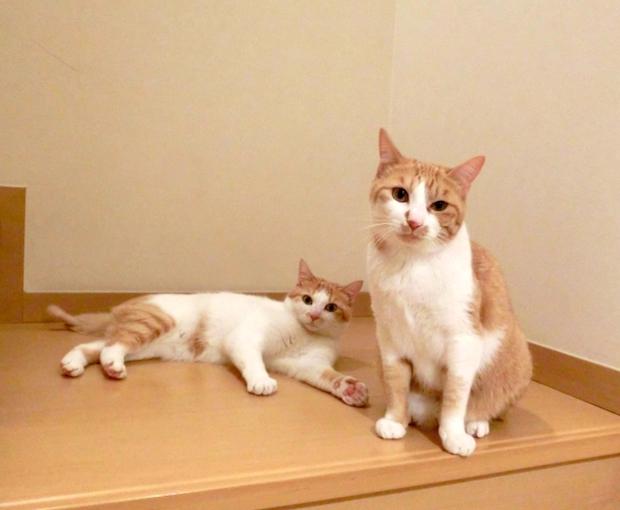 寝転がる子猫と母猫
