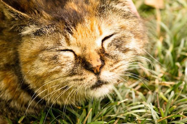 草むらで眠る猫