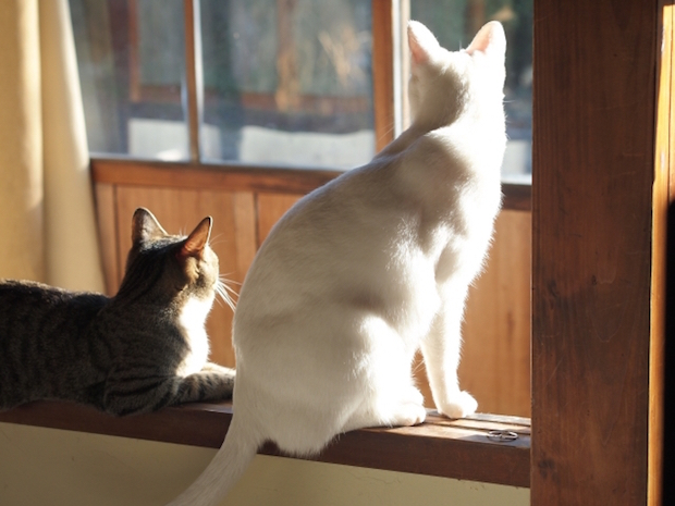 猫二匹の背中