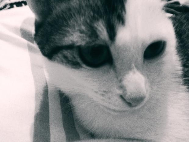 顔色の悪い猫