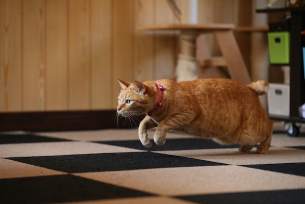 走っている猫