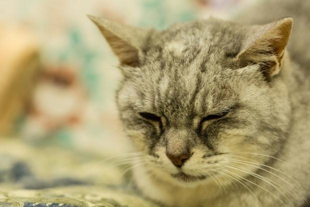 眠っている猫の顔のアップ