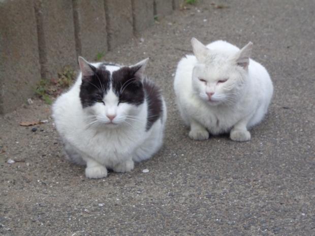 2匹並んでいる姿
