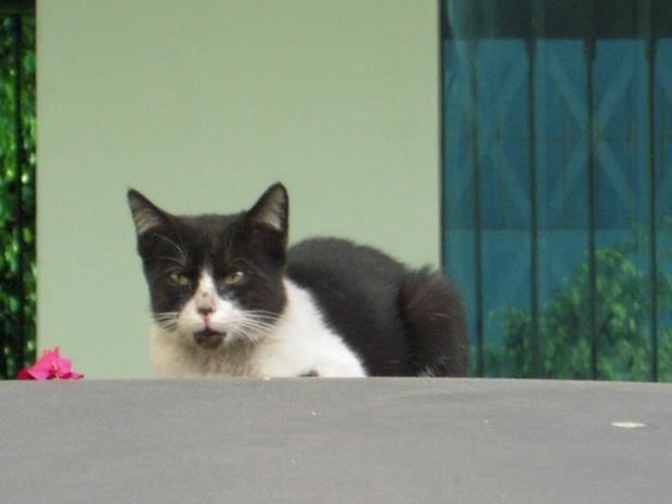 遠目で見つめてくる猫