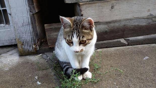 外で座っている猫