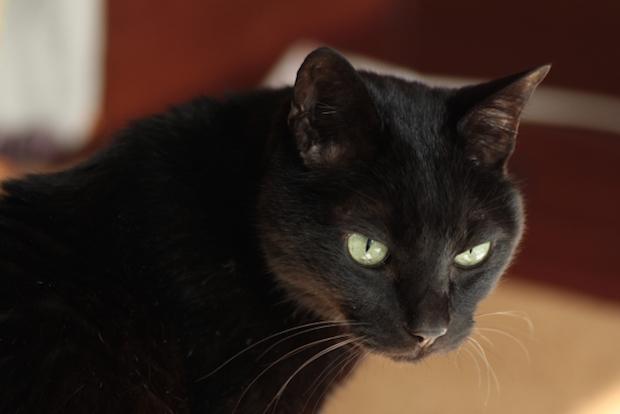 黒猫が振り向く様子