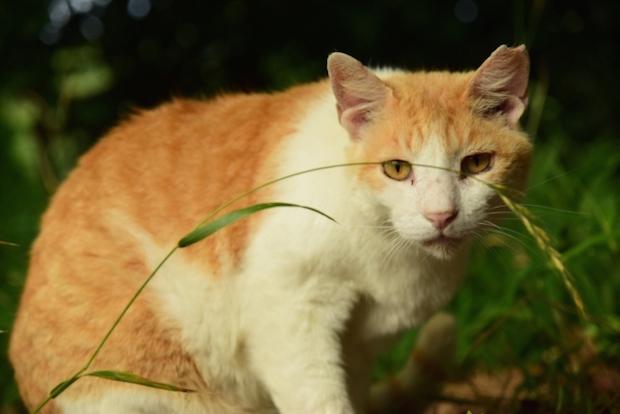 遠くを見つめる野良猫