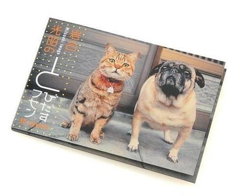 iwago-cat-pickoutstickynote2