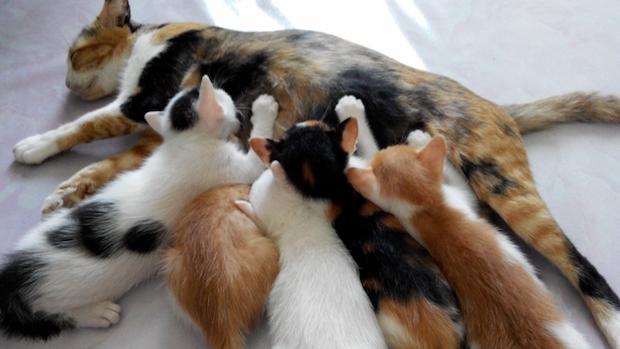 生まれたての猫
