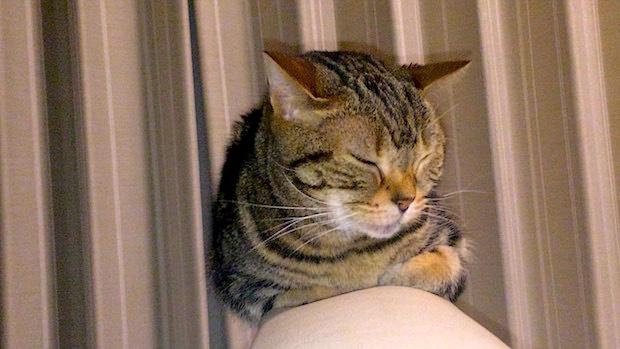 メオの寝顔