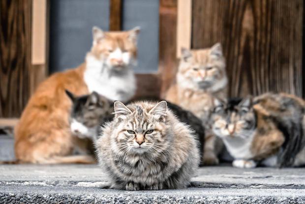 猫のボディータイプ