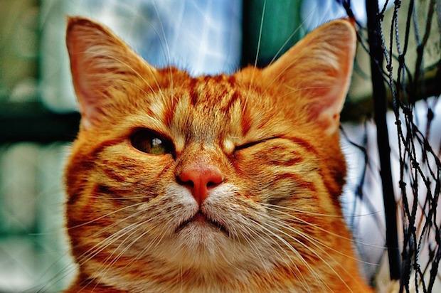 片目を瞑る猫