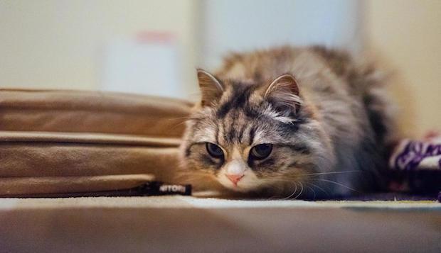 狙いすましたメス猫