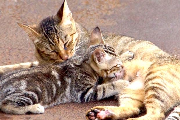 乳を飲む猫
