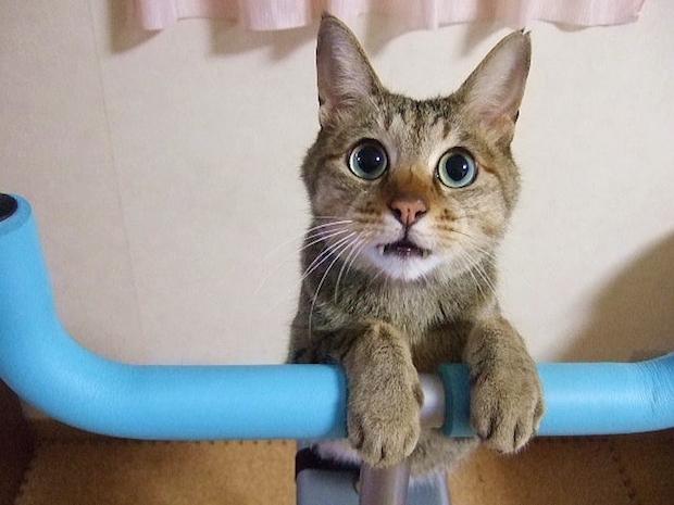 棒に手を乗せて見つめる猫