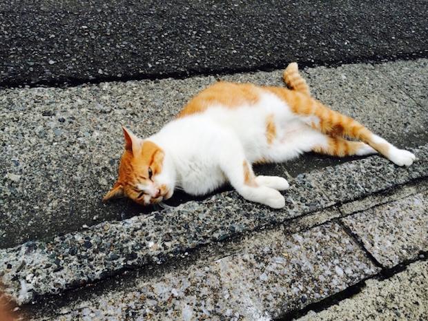 道で倒れこむ猫