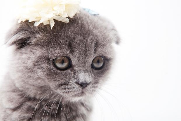 花をつけた猫