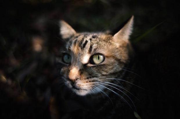 暗闇から顔を出す猫
