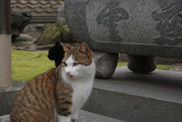 お寺にいる猫