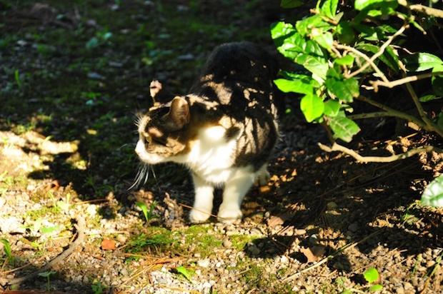 草むらから出てきた猫
