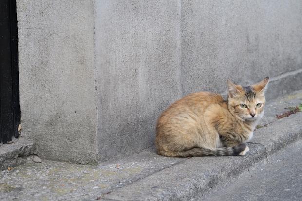 街角に佇む猫