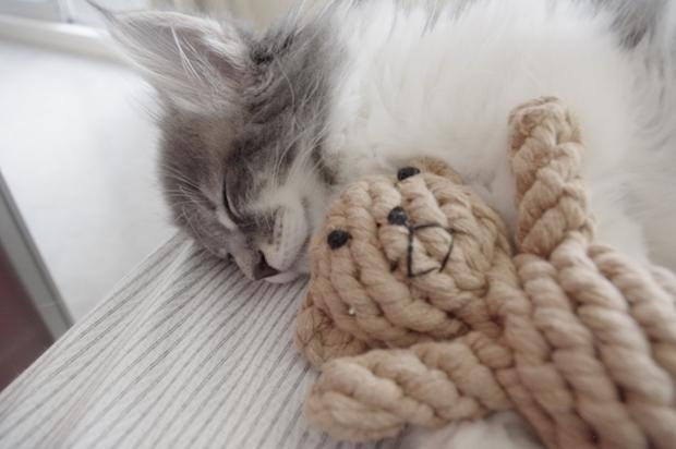 ぬいぐるみと眠る猫