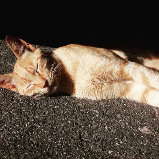 道で寝込む猫