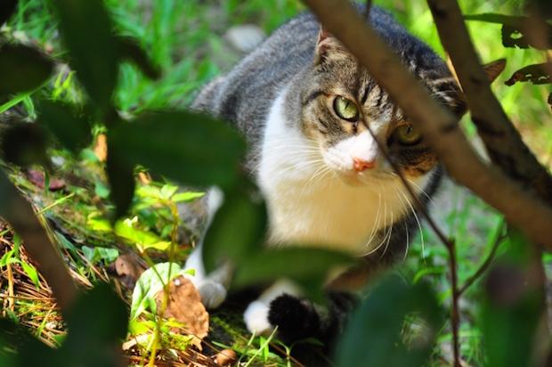 木陰から覗く猫