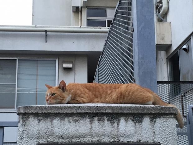 壁の上で昼寝する猫