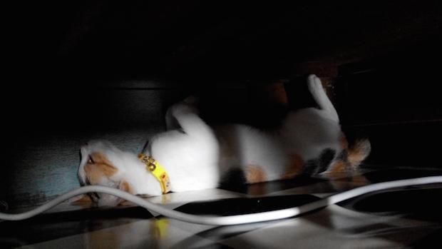 暗闇で転がる猫