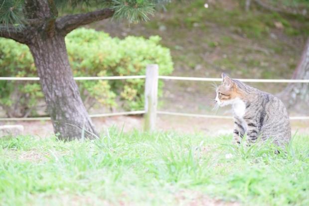 野原で座る猫