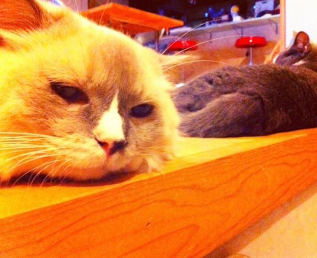 転がる2匹の猫