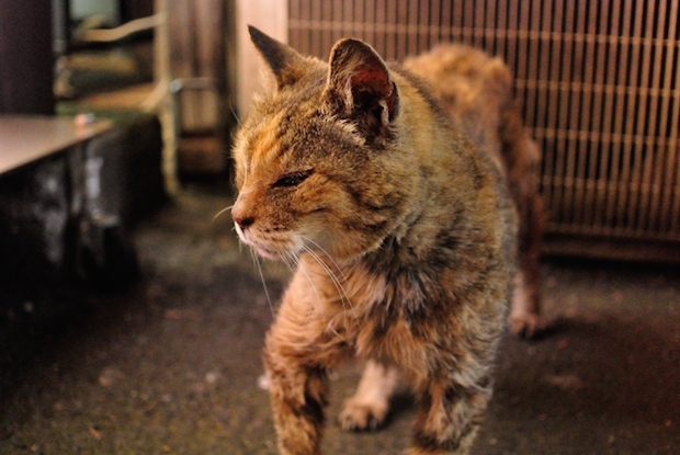 中華街の猫